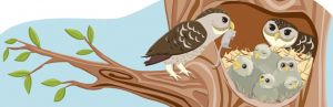 SS-owls_9.jpg