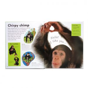Real-size Baby Animals, DK, Chimp spread