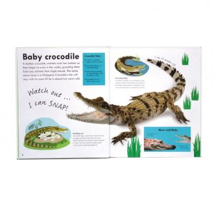 Real-size Baby Animals, DK, crocodile spread