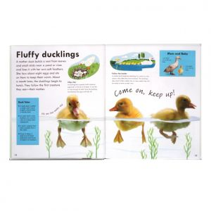 Real-size Baby Animals, DK, ducklings spread