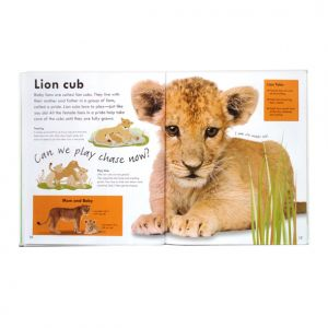 Real-size Baby Animals, DK, lion spread