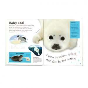 Real-size Baby Animals, DK, seal spread