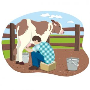 Milking on the farm, client: DK