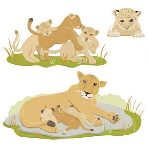 Lion cubs, Client: DK