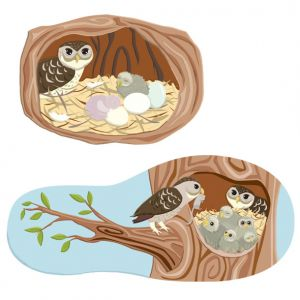 Owls Eggs and Nest, client: DK