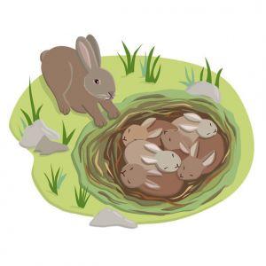Bunnies Nesting, client: DK