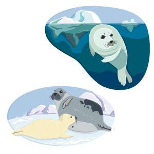 Harp Seals, client: DK