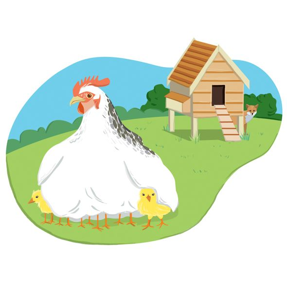 DK_Chicks_motherhen.jpg